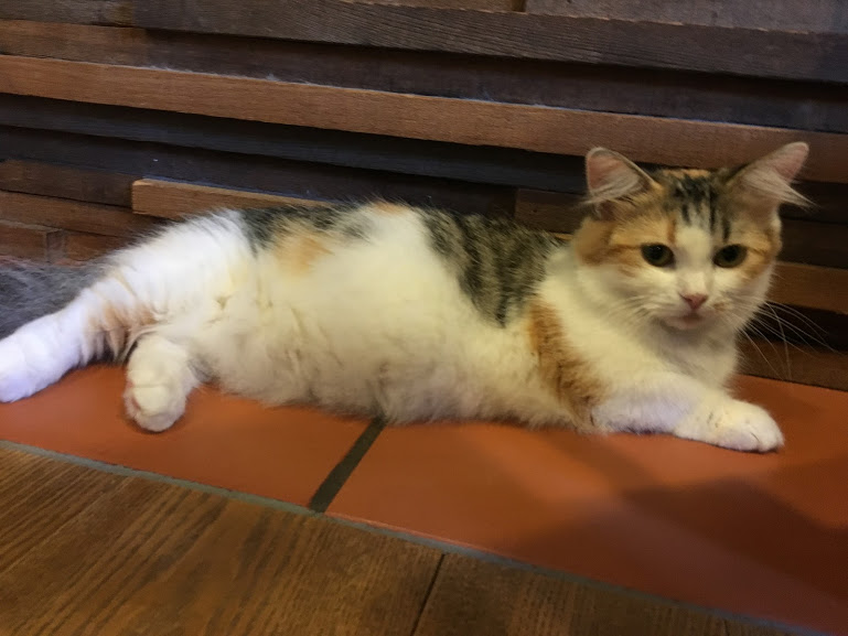 アメ村観光の休憩にぴったり!猫カフェ「CAT OF LIBERTY」